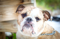 Florida Pet Photography: Tampa