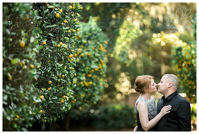 Amanda and Jose embrace and share a sweet moment among the orange groves at Bok Tower during their engagement session.